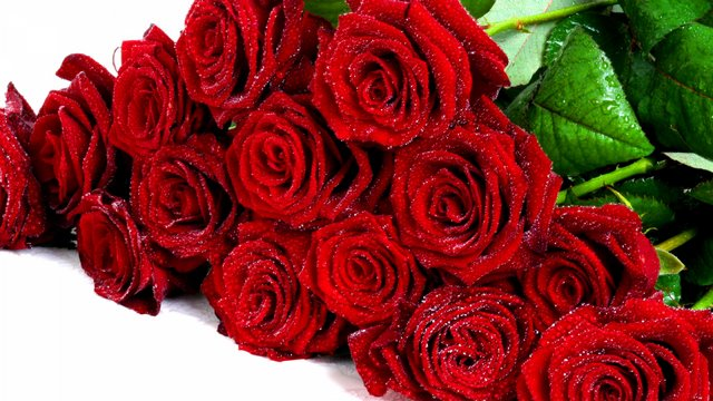 photos/roses_flowers_bouquet_red_elegant_drops_32853_1920x1080.jpg